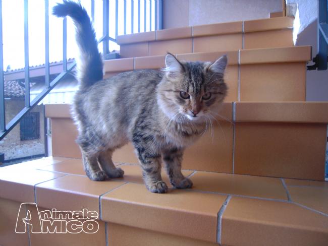 Offro in regalo da privato a bs bellissimo gatto for Cerco arredamento casa in regalo