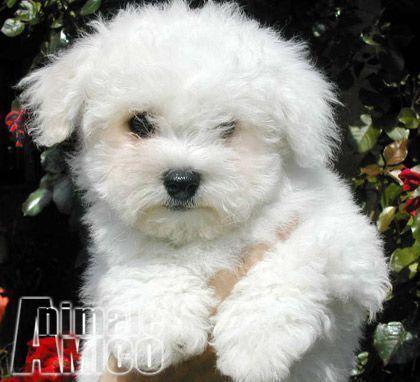 Cuccioli in vendita a cosenza