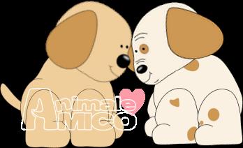 Cerco cucciolo maltese da allevatore a milano ritiro for Cerco divano in regalo milano