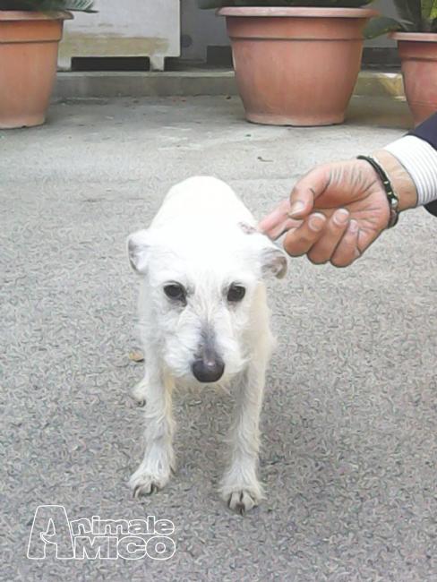 Offro in regalo cucciolo da privato a na regalo cucciolo for Offro in regalo mobili