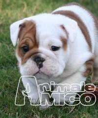 Pagina 852 Regalo Cachorro De Bobtail 2018