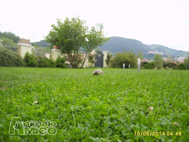 Cerco da privato a pg tartaruga terrestre 15 05 2015 for Cerco acquario per tartarughe