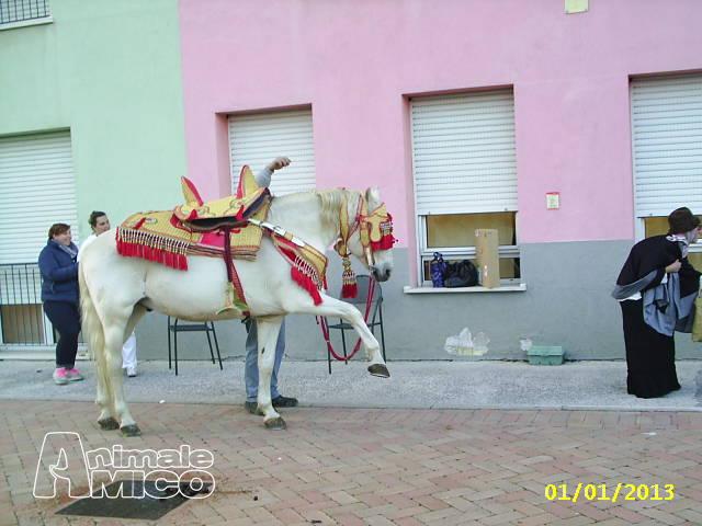 Cerco.ragazza Cuneo
