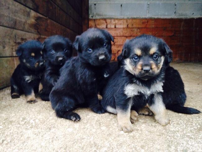 offro in regalo cucciolo da privato a rm cucciole 07 06 2015