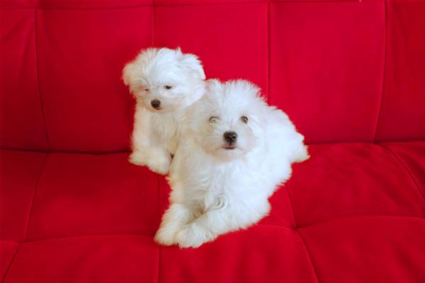 Cani di piccola taglia in regalo a rovigo