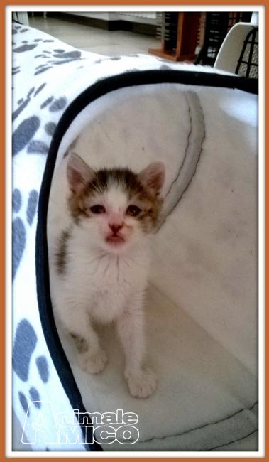Offro in regalo cucciolo da privato a pv regalo gattini for Cerco camera da letto in regalo milano