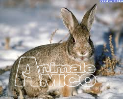 Cerco da privato a animali da cortile 18 05 2017 for Cerco in regalo