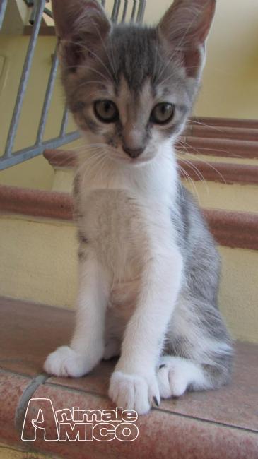 Regalo cucciolo da volontario a al gattiin regalo gattini hanno un bisogno immediato di una - Regalo casa nuova ...