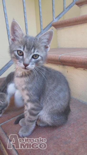 Offro in regalo cucciolo da volontario a al gattini hanno un bisogno immediato di una nuova casa - Regalo casa nuova ...