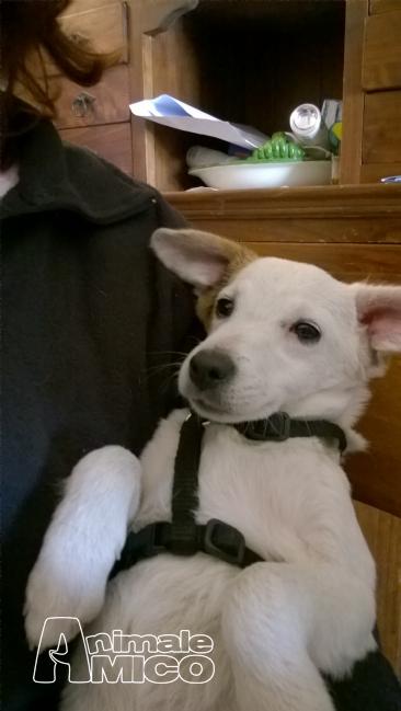 Offro in regalo cucciolo jack russel da privato a roma for Cerco una casa in regalo