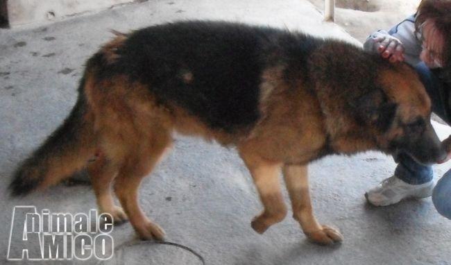 Regalo da volontario a caniin regalo geronimo pastore for Cerco cose vecchie in regalo