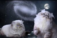 Cuccioli di gatto in regalo in toscana