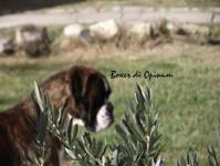 Cani in regalo zona veneto