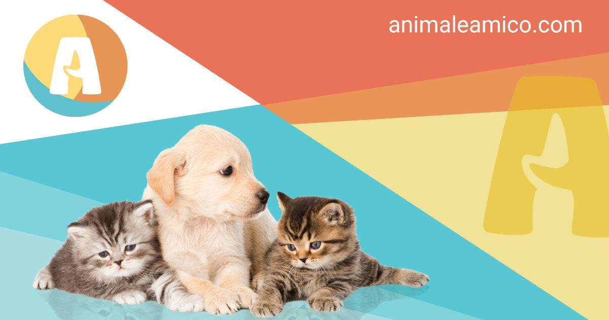 Annunci animali cani gatti cuccioli da allevamenti e privati for Cerco divano in regalo milano